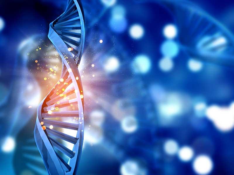 Die menschliche DNA enthält über 40.000 Gene. Surfen Sie durch das menschliche Genom und entdecken Sie die vielfältigen Funktionen.